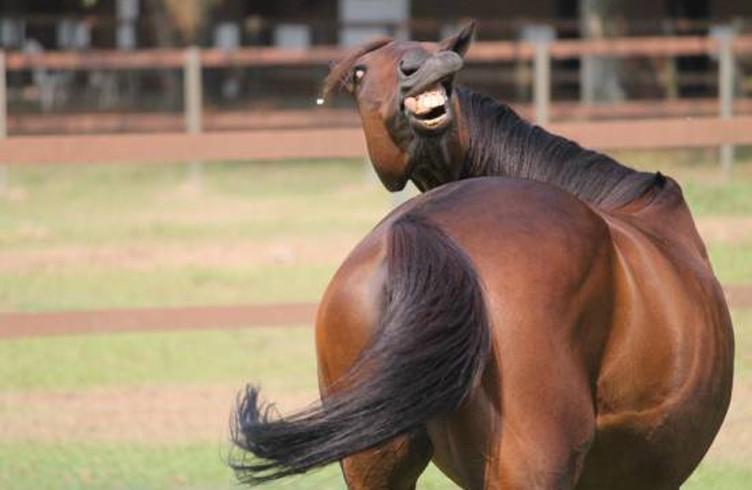 photo cheval rigole